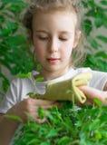 La bambina pulisce la polvere dalle foglie fotografie stock