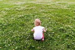 La bambina raccoglie il trifoglio bianco Immagine Stock Libera da Diritti
