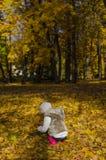 La bambina raccoglie le foglie Fotografie Stock Libere da Diritti