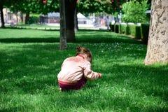 La bambina riunisce i fiori fotografia stock libera da diritti