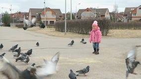 La bambina spaventa i piccioni nel parco in primavera stock footage