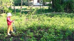 La bambina sta innaffiando il giardino ed il letto Irrigazione del frutteto stock footage