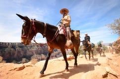 la bambina sta montando un cavallo Immagine Stock