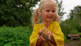 La bambina tiene in sue mani un piccolo pollo video d archivio