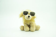 La bambola con i vetri di sole, backround isolato e bianco del cane immagine stock