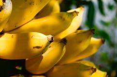 La banana è una frutta Quello non è probabile avere molta energia Ma credilo o non, la banana è uno strato di sostegno di aliment Fotografia Stock