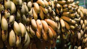 La banana organica al mercato un il casco di banane è per la vendita ad un mercato locale archivi video