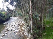 La Banca del fiume e della foresta Immagine Stock Libera da Diritti