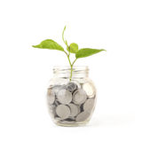 La Banca, porcellino salvadanaio, soldi, monete Fotografie Stock Libere da Diritti