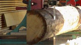 La banda vio para cortar el árbol de abeto almacen de metraje de vídeo