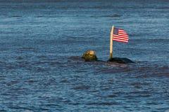 La bandera americana en una roca en un río Fotografía de archivo