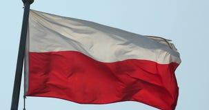 la bandera de 4k Polonia está agitando en viento almacen de video