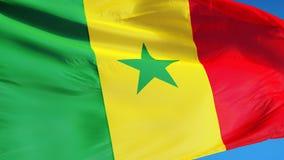 La bandera de Senegal en la cámara lenta inconsútil colocó con alfa libre illustration