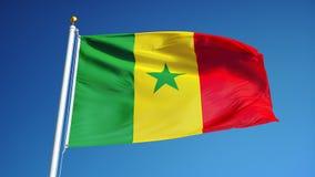 La bandera de Senegal en la cámara lenta inconsútil colocó con alfa stock de ilustración