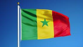 La bandera de Senegal en la cámara lenta inconsútil colocó con alfa almacen de video