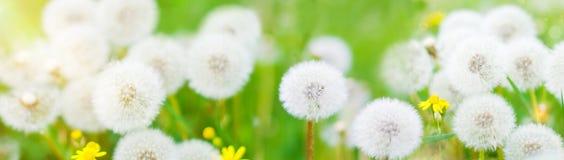 La bannière avec la nature fleurit le fond - calibre d'en-tête de Web Photo libre de droits