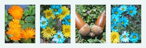 La bannière d'amour fleurit bleu-clair Photographie stock