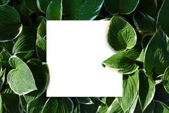 La bannière de livre blanc entre les feuilles vertes raillent  Photos stock