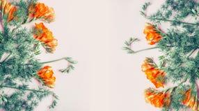 La bannière florale créative avec le freesia fleurit sur le fond de rose en pastel, vue supérieure Photo stock