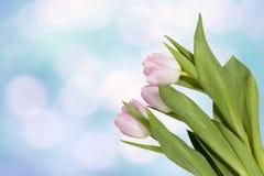 La bannière fraîche de tulipe de rose de ressort avec l'espace de copie sur le ciel bleu Image libre de droits