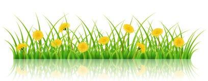 La bannière horizontale de nature avec l'herbe et le pissenlit fleurissent Photo stock