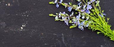la bannière pour le site Web, officinalis de Veronica fleurissent sur l'espace noir de fond pour le texte images stock