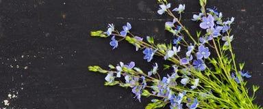 la bannière pour le site Web, officinalis de Veronica fleurissent sur l'espace noir de fond pour le texte photo stock