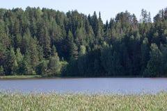 La banque de la rivière bleue avec l'élevage forêt tubulaire et dense Photo libre de droits