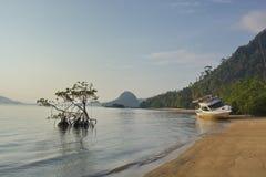 La barca e la mangrovia gettate alla spiaggia Immagini Stock