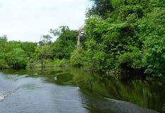La barca sveglia sul Amazon Immagini Stock Libere da Diritti