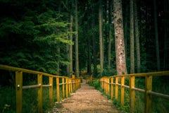 La barrière dans la forêt Photographie stock libre de droits