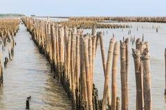La barrière en bambou protègent le banc de sable contre la vague de mer Image libre de droits