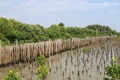 La barrière en bambou protègent le banc de sable contre la vague de mer Photographie stock libre de droits