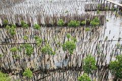 La barrière en bambou protègent le banc de sable contre la vague de mer Images stock
