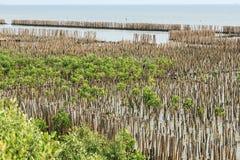 La barrière en bambou protègent le banc de sable contre la vague de mer Image stock