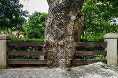 La barrière est infiltrée par le grand arbre Photo libre de droits