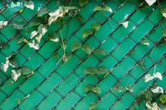 La barrière et le métal en plastique verts engrènent la texture de mur Image stock