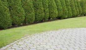 La barriera degli alberi di cipresso si avvicina al prato inglese Immagini Stock Libere da Diritti