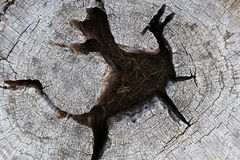 La base de madera se forma como un dragón Fotografía de archivo libre de regalías