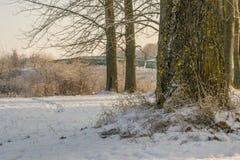 La base di un albero nel parco di inverno, vicino al terreno coperto di neve fotografie stock