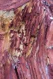 La base rouge cramoisie en bois de fond de baril de fond a coupé de vieilles bandes verticales de fibre conçoivent rustique images stock