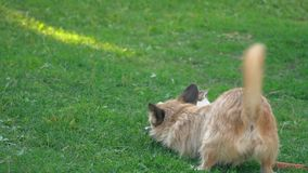 La bataille d'un chien et d'un chat banque de vidéos