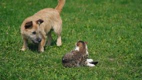 La batalla de un perro y de un gato metrajes