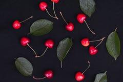 La baya anaranjada de la cereza con verde se va en un fondo oscuro foto de archivo libre de regalías