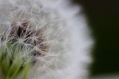 La beauté d'une fleur morte Images stock