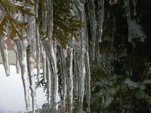 La beauté de la glace après pluie verglaçante Photos libres de droits