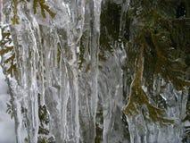 La beauté de la glace après pluie verglaçante photographie stock
