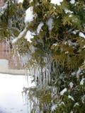 La beauté de la glace après pluie verglaçante image libre de droits