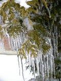 La beauté de la glace après pluie verglaçante image stock