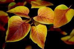 La beauté de l'automne photo libre de droits